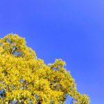晴れ渡る青空と樹木